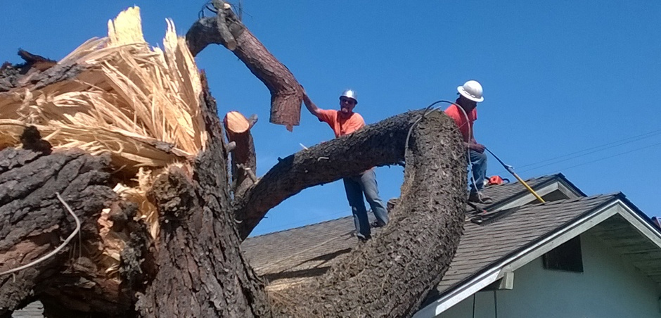 Falling tree, two men roof